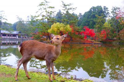 秋の奈良で紅葉をめでる その7 東大寺&正倉院