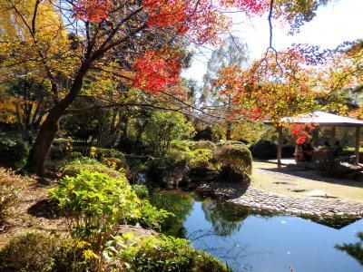 紅葉探して 大宮散歩♪ 大宮公園・小動物園・氷川神社