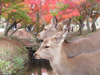 2018秋 「そうだ、関西へ行こう!」(3)紅葉狩り@奈良公園
