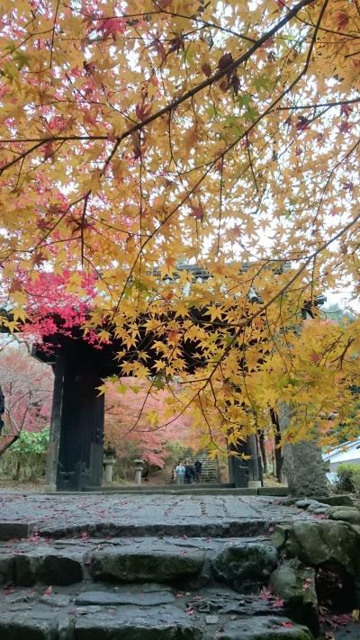 紅葉さるく 小京都秋月と福岡イルミ