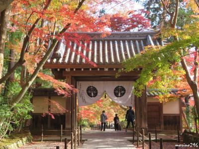 2018秋 「そうだ、関西へ行こう!」(4)紅葉狩り@長岡京・光明寺