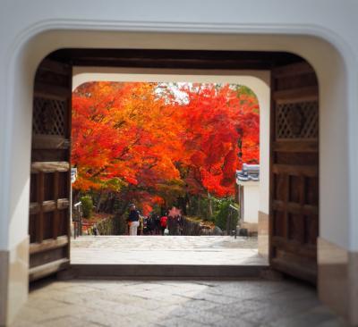 パン屋のついでに宇治散策 紅葉の秋のまったり散歩