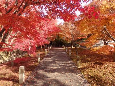 秋の智積院   ~もみじと障壁画と庭園と~