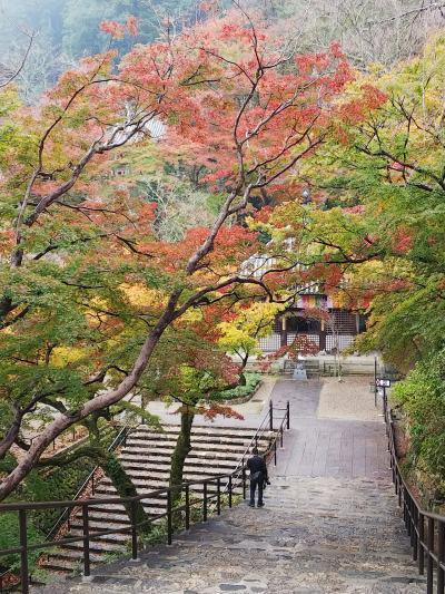 紅葉の奈良&京都の旅