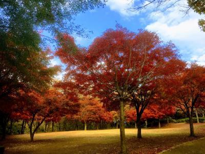 秋の舞岡公園でのんびり散策