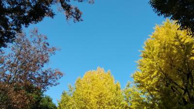 イチョウがいろづく上野をお散歩