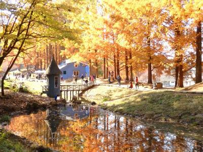ムーミン谷に秋が来た☆紅葉の「あけぼの子どもの森公園」