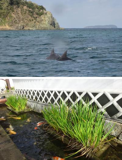 naniwa lady さんと大谷山荘連泊ツアー:遊覧船で思いがけずイルカウォッチング。やっぱり、運がついてる旅行だった~