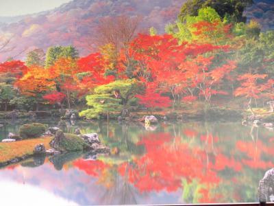京都嵐山竹林~嵯峨野トロッコと保津川川下り