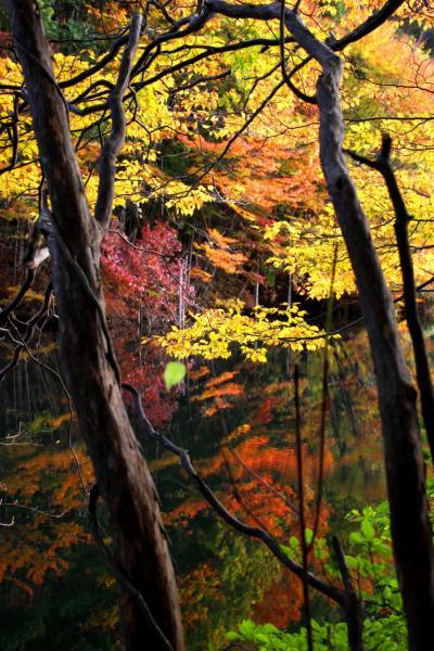 ◆山紫水明・錦織り成す滑川砂防ダム湖