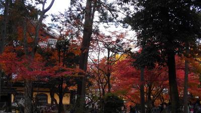 2018年11月 京都東山トレイルと神社仏閣の紅葉巡り&西国三十三ヶ所巡礼=15番 今熊野観音寺=