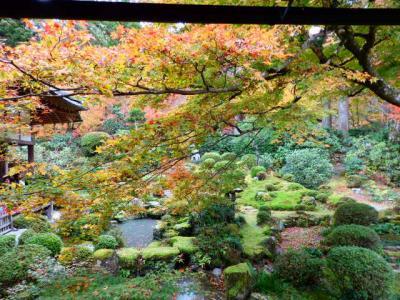 再び紅葉の京都へ