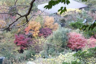 扇ガ谷山中から見る北鎌倉の紅葉-2018年冬