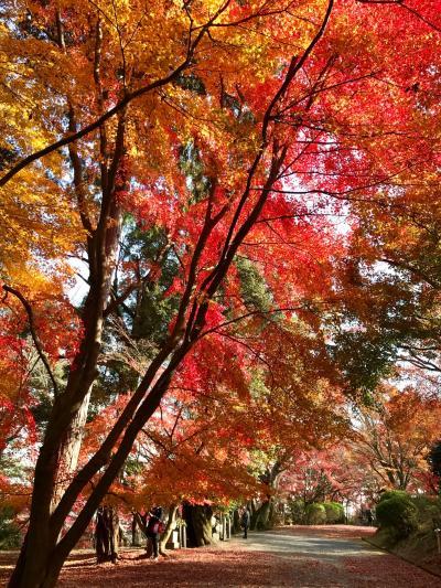 大津へ ~誕生日祝いを兼ね 紅葉と温泉、美味しいもの満喫~