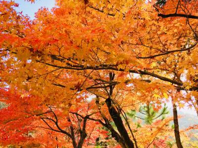 誕生日を 紅葉?真っ盛りの奈良 京都ですごす1日目