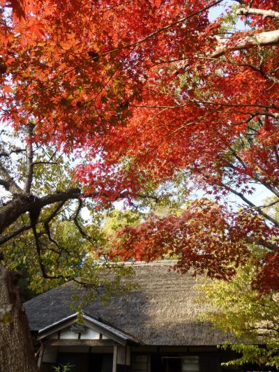昭和モダ~ンな建物と紅葉満喫 in 小金井公園