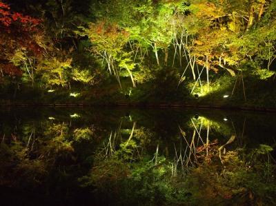11月初旬京都1日目(高台寺・圓徳院ライトアップ)