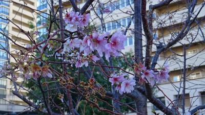 長距離散策 自宅からJR宝塚駅まで歩き、JRで中山寺駅に戻り帰宅しました その2。