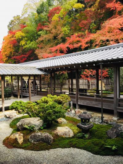 11月3連休京都紅葉旅行。後半東山寺巡り編。