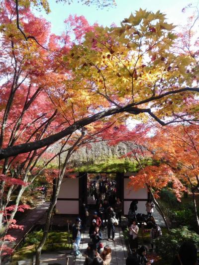京都2018紅葉 【10】常寂光寺
