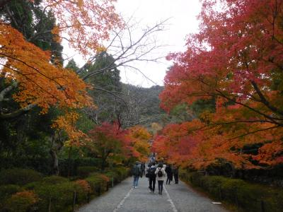 京都2018紅葉 【11】二尊院