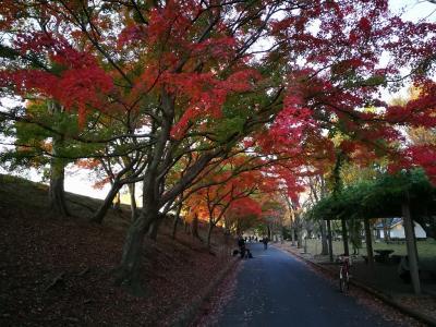 姫路/姫山公園まで紅葉を見に行きました。