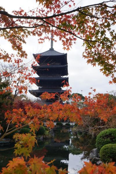 そうだ!京都行こう!! 見頃を迎えた鷹ヶ峰紅葉めぐり