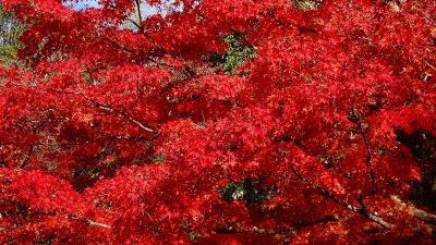 大阪万博が決まったので、紅葉の万博公園へ 日本庭園の紅葉 下巻。