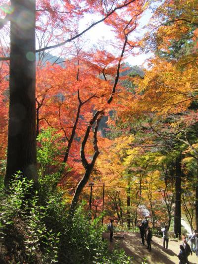 香嵐渓の紅葉・小原町の四季桜・恵那峡の紅葉を訪ねて