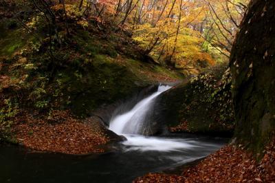 ◆晩秋の西の郷遊歩道/紅葉&滝めぐり