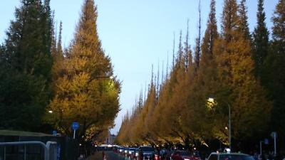 神宮外苑の銀杏の木を見に行きました