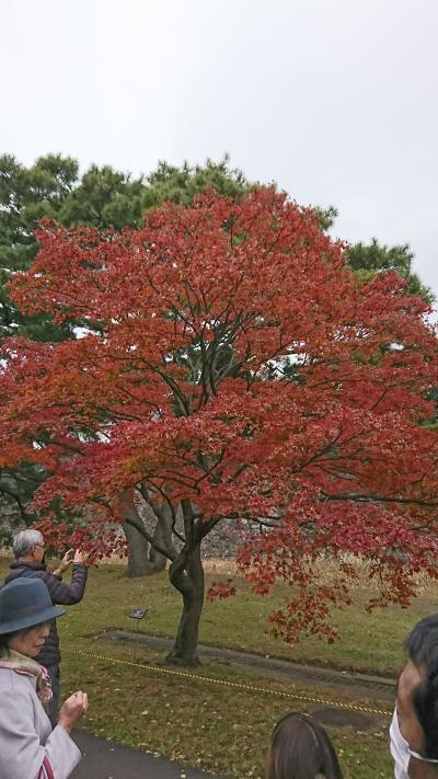 秋の皇居「乾門」通り抜け