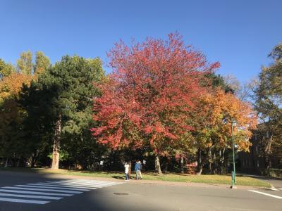駆け込み紅葉~札幌公園物語
