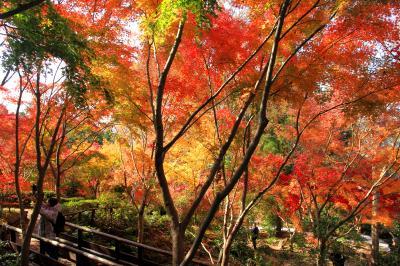 大阪府立花の文化園の紅葉