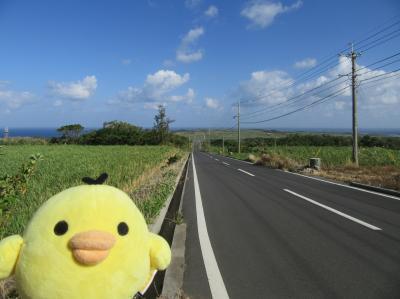 鹿児島県 喜界島 を たびするトリ