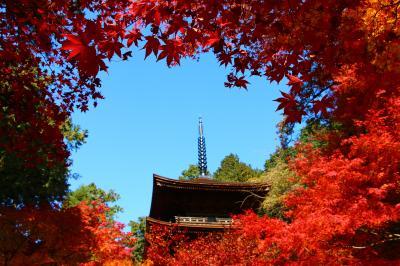 滋賀の紅葉は真っ赤