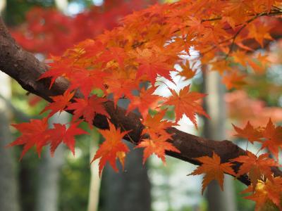 大田黒公園を彩る日本庭園の紅葉