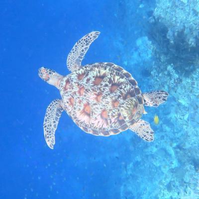 珊瑚の海は絶対肌にいいんだってばパングラオの旅②