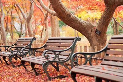 12月)調布・深大寺と神代植物公園~雨上がりの紅葉散歩