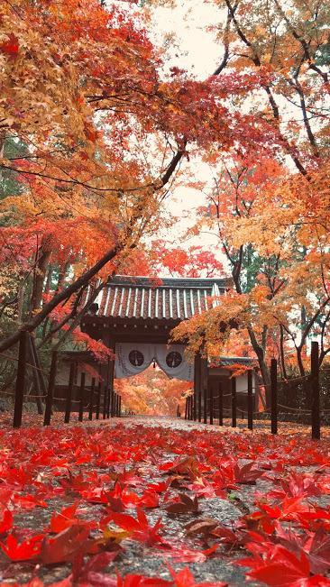 2018年12月 雨の降る早朝に 落ち紅葉の光明寺に行ってきた 今回もいいことあった(笑)