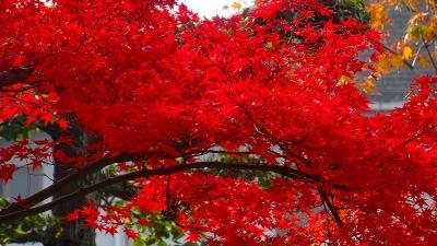 街歩き 荻野地区を中心に花の写真を撮りに徘徊しました その2。