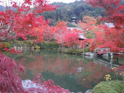 バースデイ旅行京都&神戸 (2)永観堂の紅葉