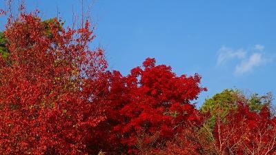 紅葉の中山寺をお参りしました 中巻。