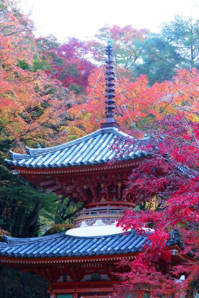 大威徳寺の紅葉を求めて