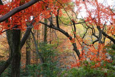 生田緑地の紅葉・・・