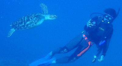冬でも暖かい沖縄へ(18)恩納村ダイビング・美しいサンゴ、トウアカクマノミ、真栄田岬のウミガメ。ランチは花織そば。ディナーはルームサービスカレーとそば