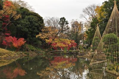 2018年12月2日 肥後細川庭園の紅葉