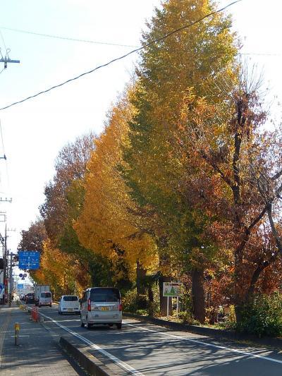 ふじみ野市鶴ケ岡中央通り付近で見られたイチョウの黄葉