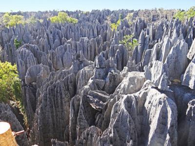マダガスカル モロンダバ-ベクパカ ツィンギー・ド・ベマラハ国立公園
