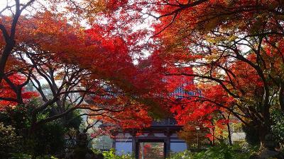 大阪池田市の紅葉・十月桜・ウォンバット(1) 久安寺の紅葉 その1。